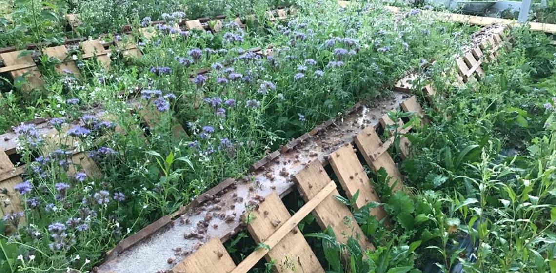 La permaculture est une solution alternative à l'agriculture connectée